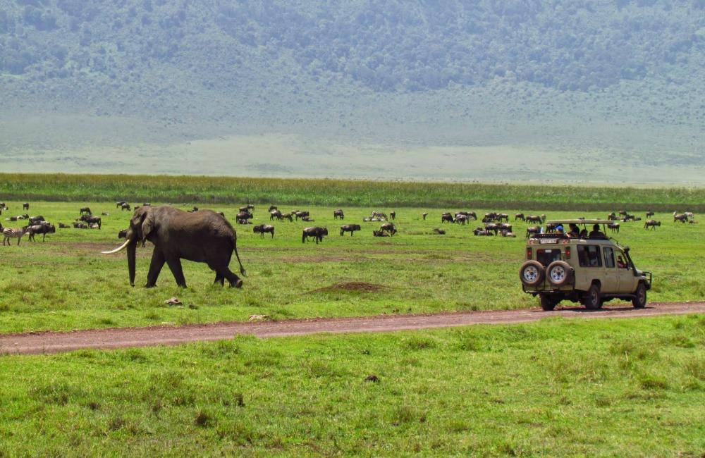 ספארי באפריקה - תמונה