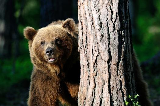 תצפיות דובים עולם הספארי