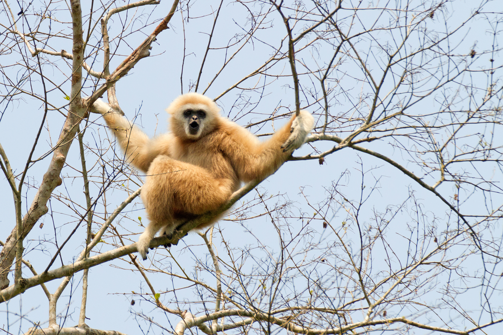 חיפוש חיות בר בקרבת בנגקוק