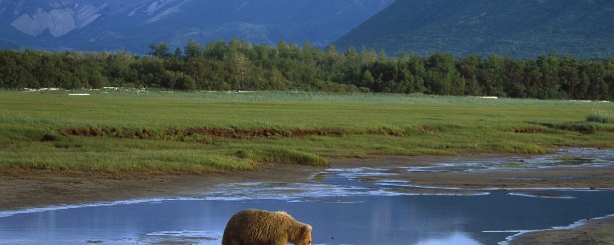 נהיגה עצמית באלסקה עולם הספארי
