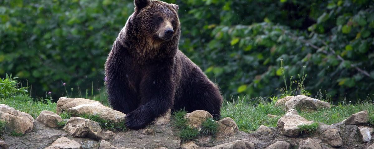 ספארי דובים ברומניה עולם הספארי