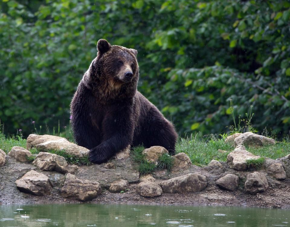 ספארי דובים ברומניה