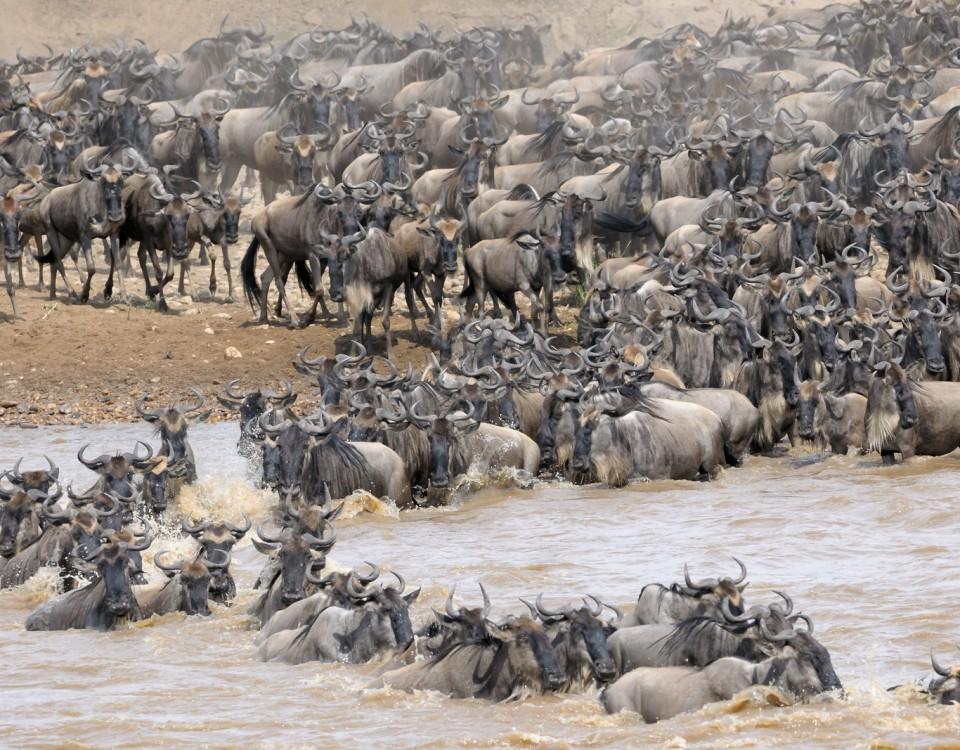 ספארי מקיף בטנזניה הנדידה הגדולה בסרנגטי עולם הספארי