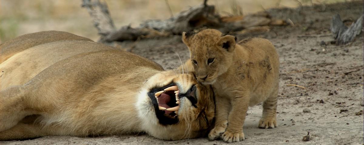 ספארי בשמורת קרוגר דרום אפריקה עצמאי עולם הספארי