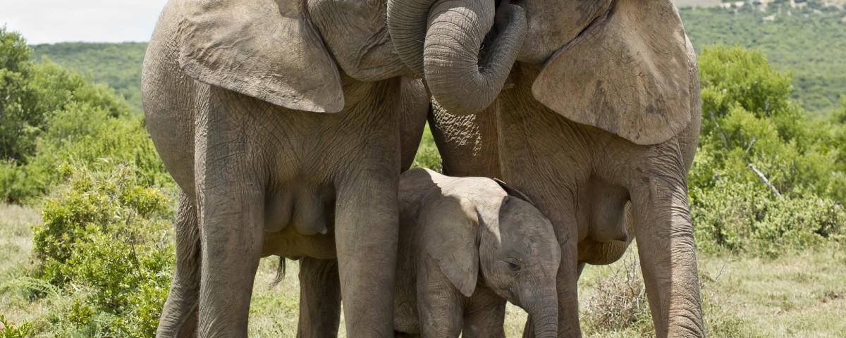 שמורת מדיקווה דרום אפריקה עולם הספארי