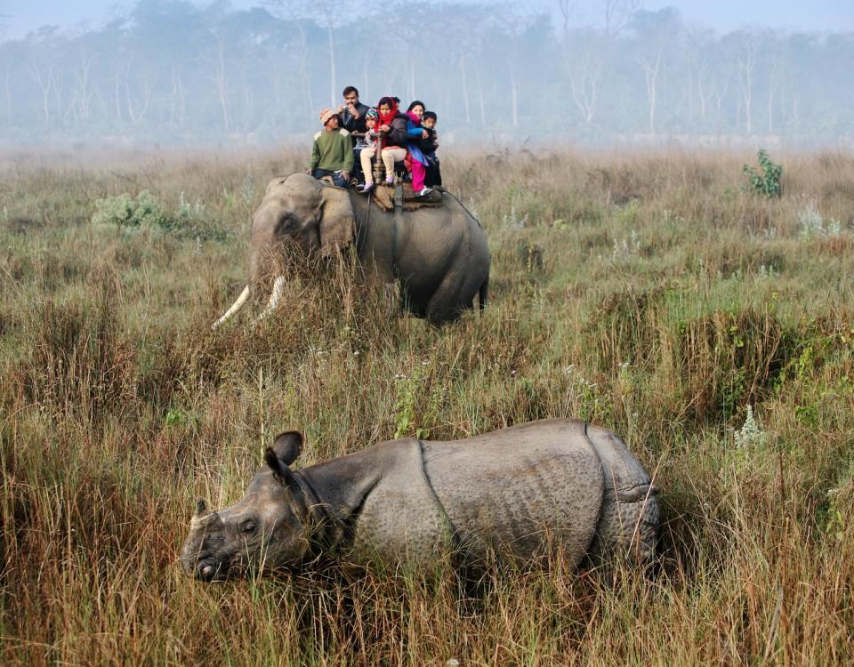 ספארי פילים במזרח הודו - תמונה