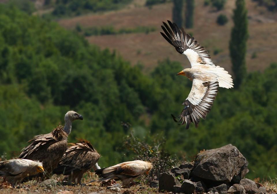 פסק זמן של צפרות בבולגריה - תמונה