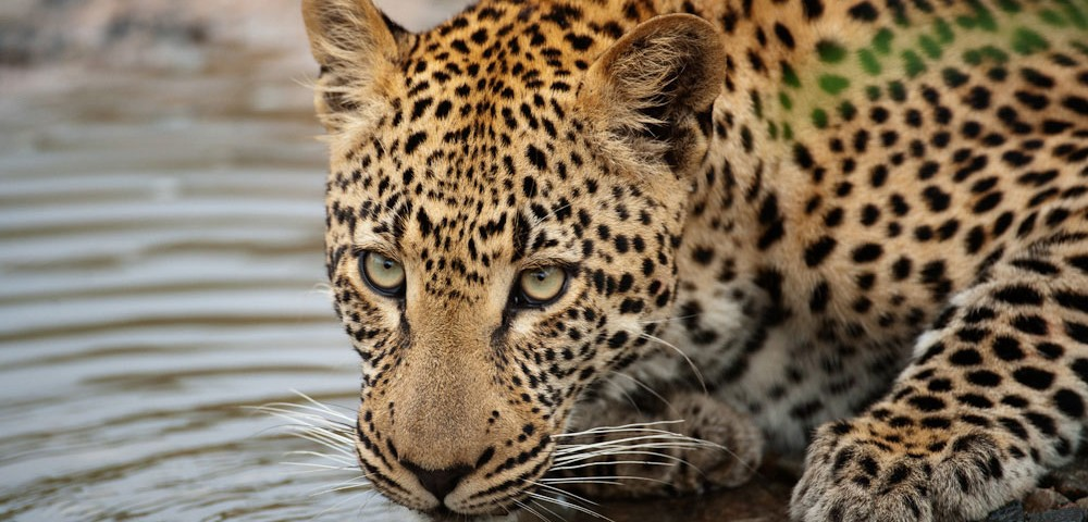 ספארי בשמורת קרוגר דרום אפריקה עולם הספארי