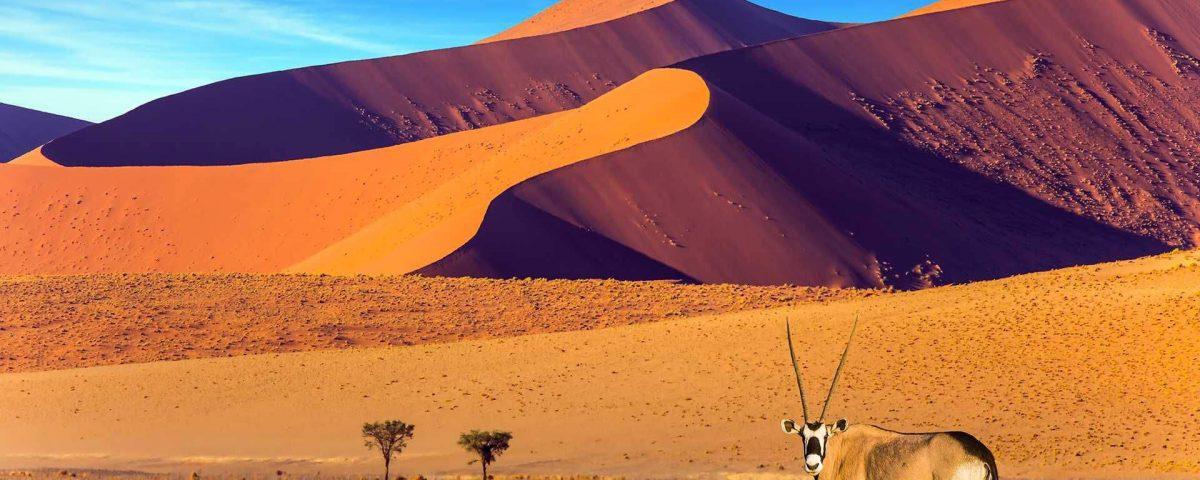 ספארי משפחתי בנמיביה עולם הספארי