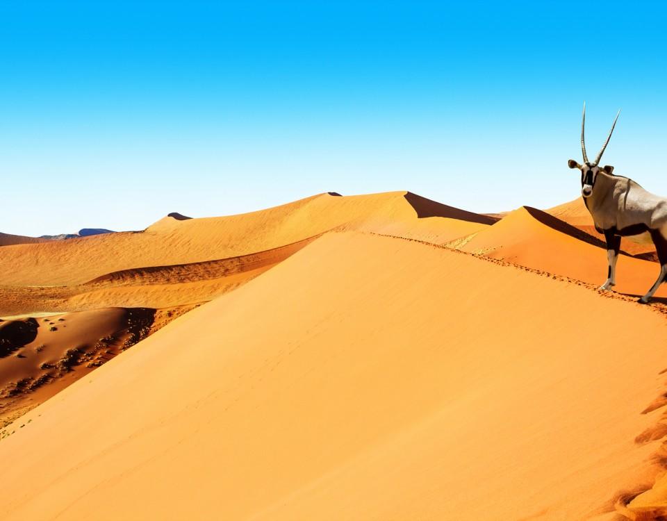 טיול בדיונות בנמיביה עולם הספארי