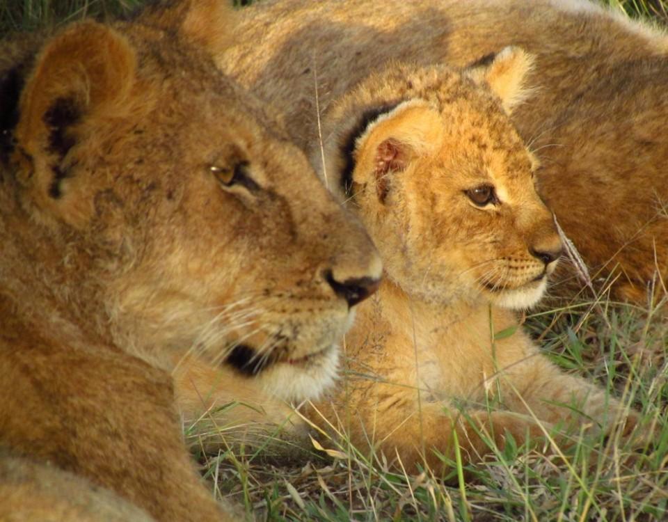 ספארי מרתק בקניה עולם הספארי