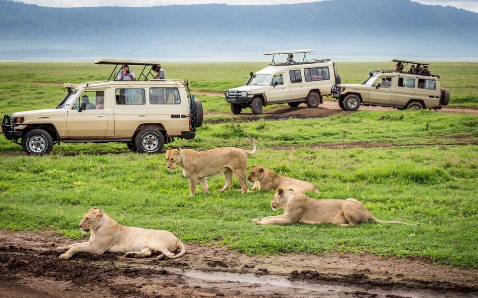 ספארי קלאסי במסגרת קבוצתית עולם הספארי אריות בסרנגטי