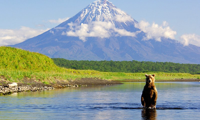 טיול בקמצ'טקה דובים עולם הספארי