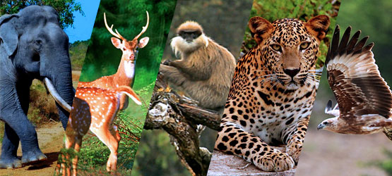 nature-wildlife-of-sri-lanka