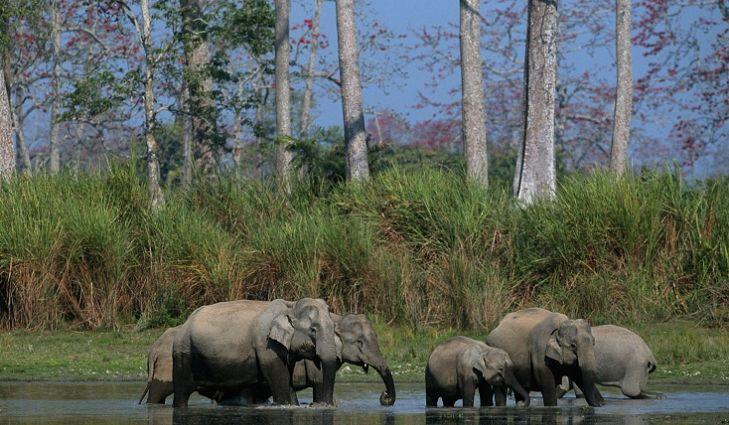 פילים בקזירנגה עולם הספארי ספארי בהודו