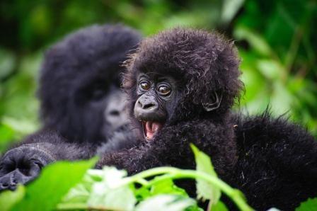ספארי באוגנדה שמורת בווינדי עולם הספארי
