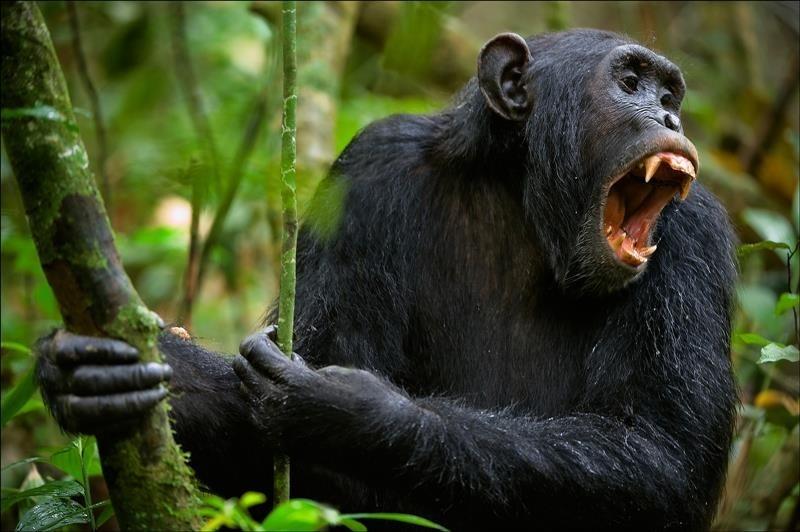 ספארי קבוצתי באוגנדה עולם הספארי