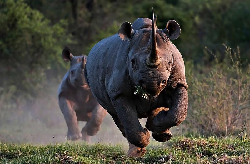 ספארי קבוצתי בקניה עולם הספארי קרנף