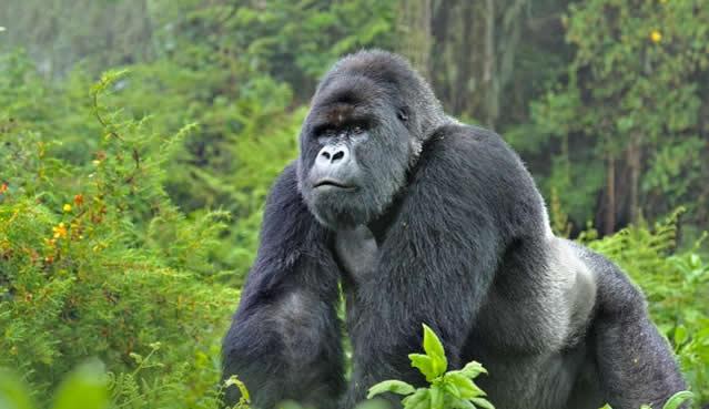ספארי באוגנדה הקלאסית עולם הספארי