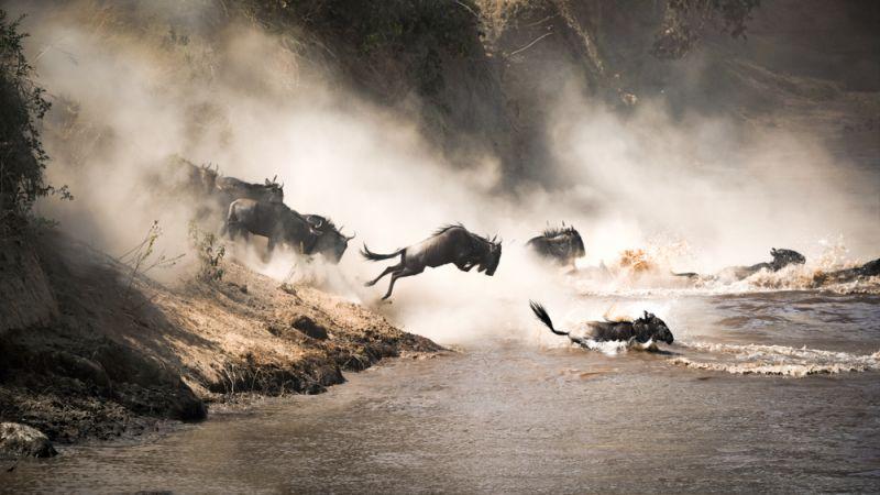 ספארי בטנזניה בדגש הנדידה הגדולה עולם הספארי